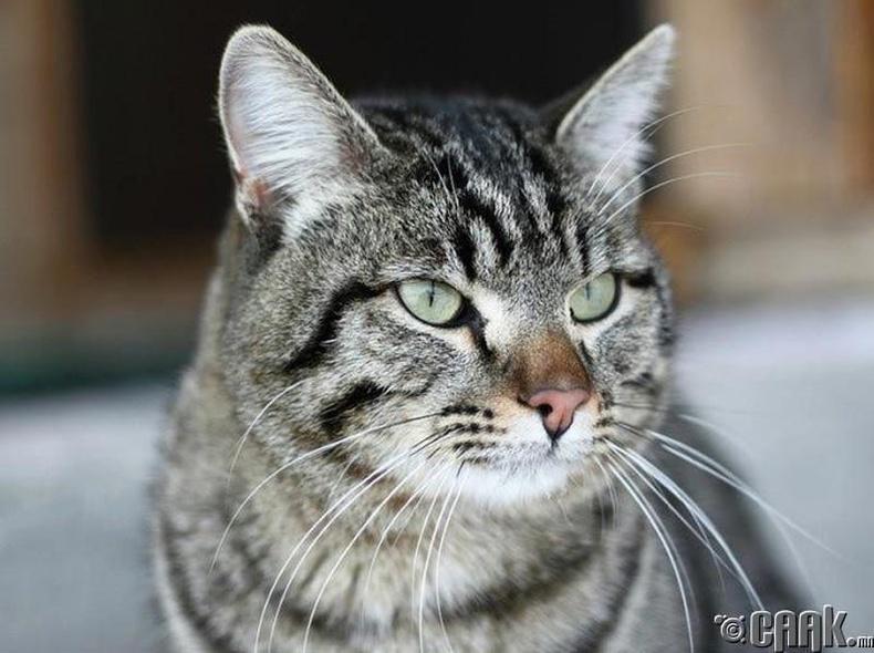 Винни муур