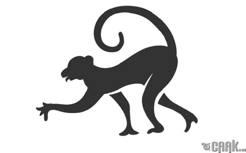 5 төрлийн мич байдаг та аль нь вэ?