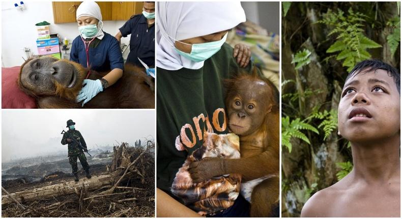 Устаж үгүй болж буй Индонезийн ширэнгэн ойн нүд хальтрам төрх