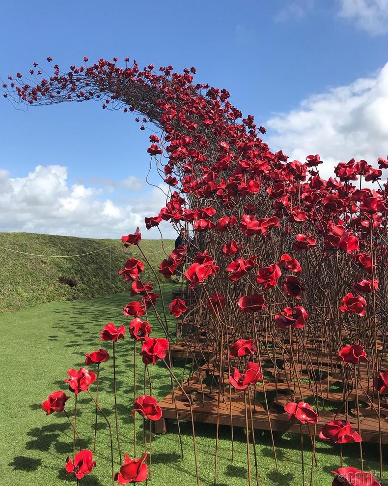 """""""Намуу цэцэгсийн давалгаа"""" - Дэлхийн I дайнд амиа алдагсдад зориулсан бүтээл"""