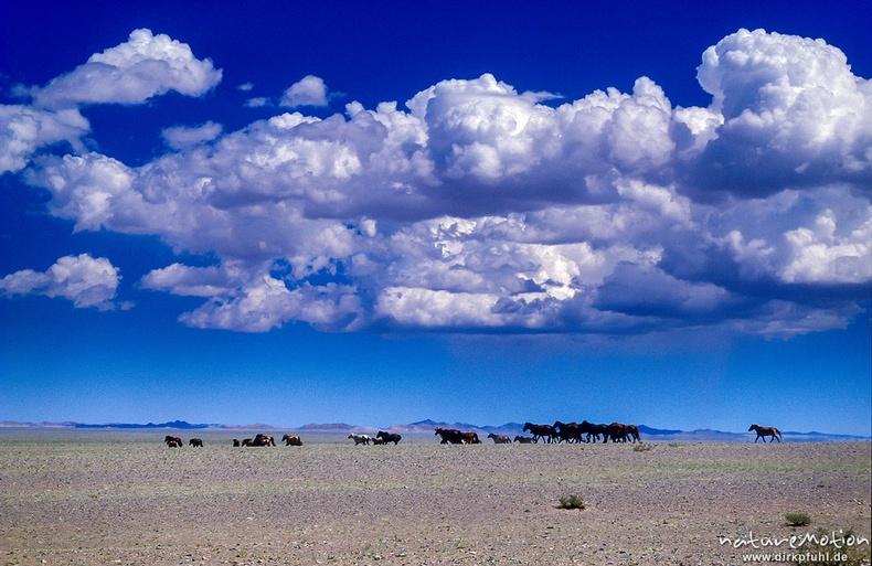 Адуун сүрэг - Монгол элс, Говь-Алтай