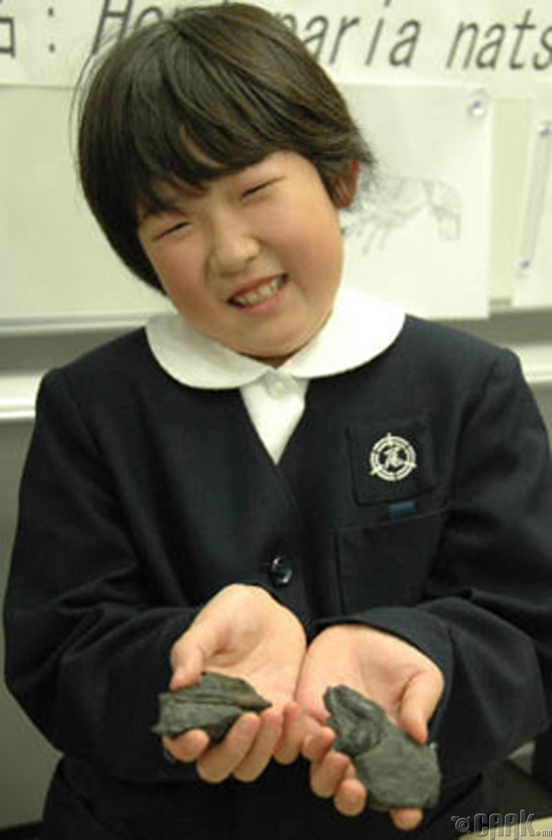 """Hoploparia natsumiae"" 130 сая жилийн өмнөх сам хорхой"