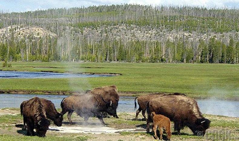 Еллоустон (Yellowstone)-ийн үндэсний цэцэрлэгт хүрээлэн, АНУ