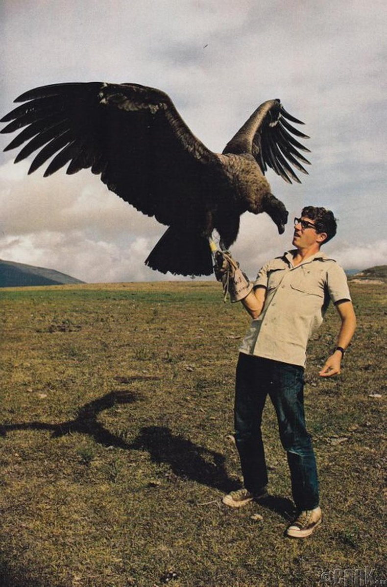 Калифорнийн кондор тас