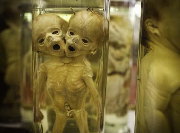Түүхэн дэх хамгийн аймшигтай гэрэл зургууд