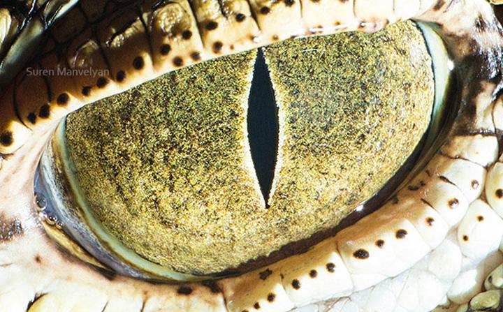 Энэ ямар амьтны нүд вэ?
