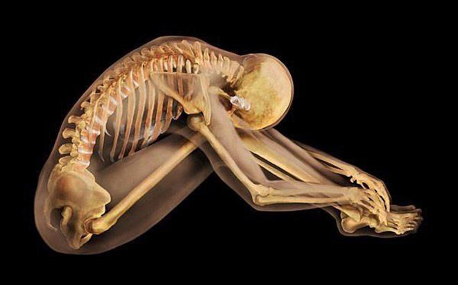 Хүний биеийн анатоми