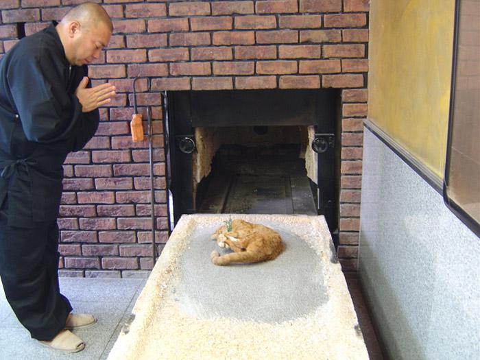 Япончуудын муур оршуулдаг газар