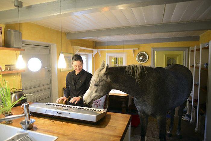 Эзнийдээ зочлох дуртай морь