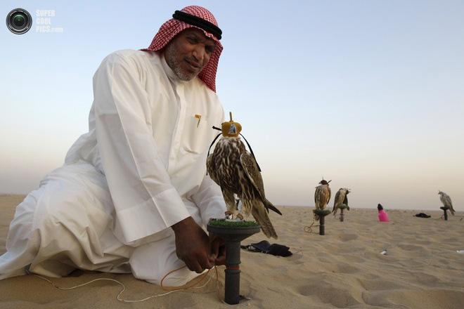 Дубайн шонхор шувуу
