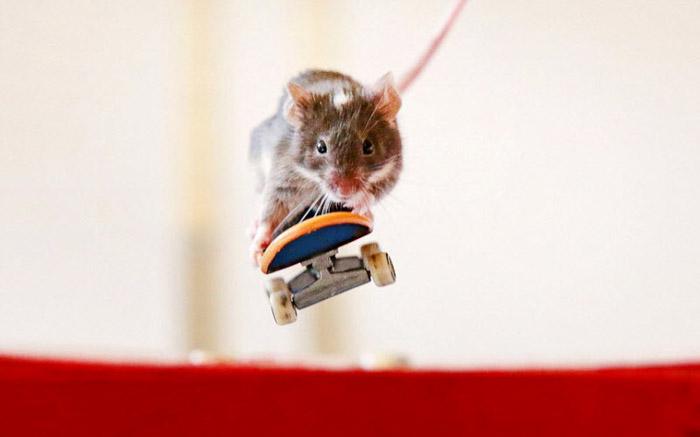 Скейтбордоор гулгах дуртай хулганууд