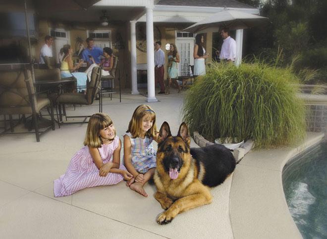 Баячуудад зориулсан 230 мянган долларын үнэтэй нохой