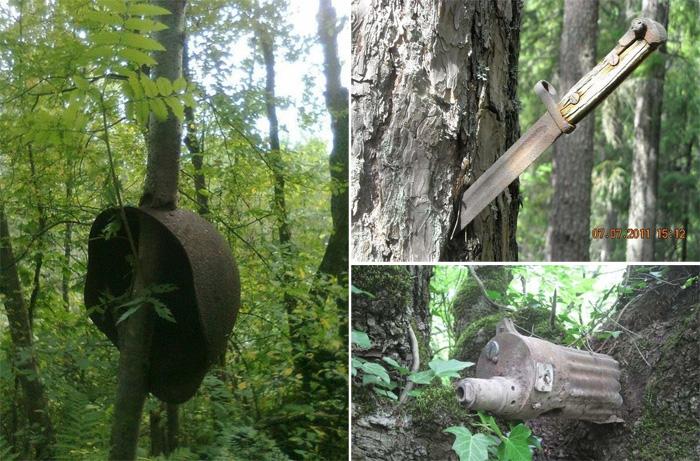 Дайн болж байсан газрын моднууд