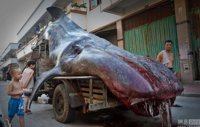 Нэгэн эр Халиман аварга загас барьжээ