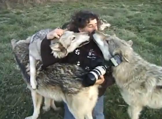 Зэрлэг чононд хайртай зурагчин