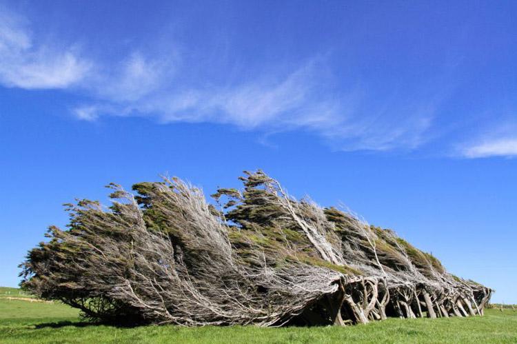 Шинэ Зеланд дахь налуу моднууд