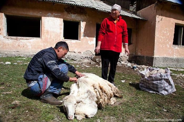 Хонь хяргах цаг боллоо