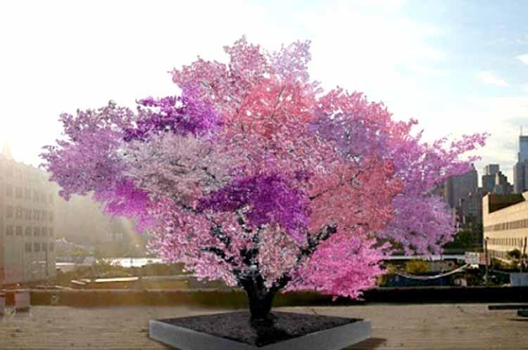 40 төрлийн жимс ургадаг гайхалтай мод