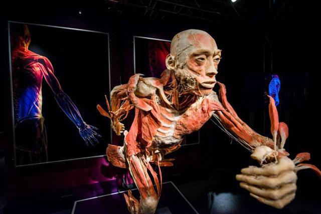 Дэлхий дээрх хүний биеийн бүтцийн музейнүүд