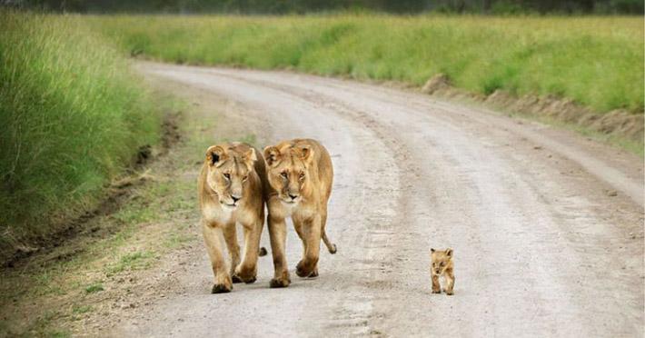 Амьтдын үрээ хайрлах сэтгэл