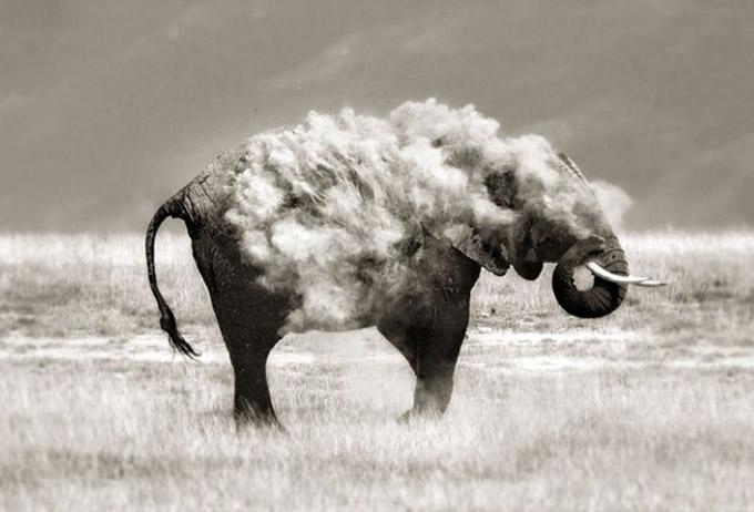 Амьтдын гайхалтай зургууд