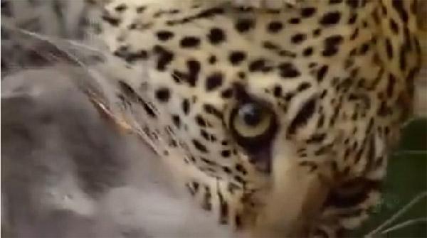 Амьтад ч гэсэн өрөвдөх сэтгэлтэй