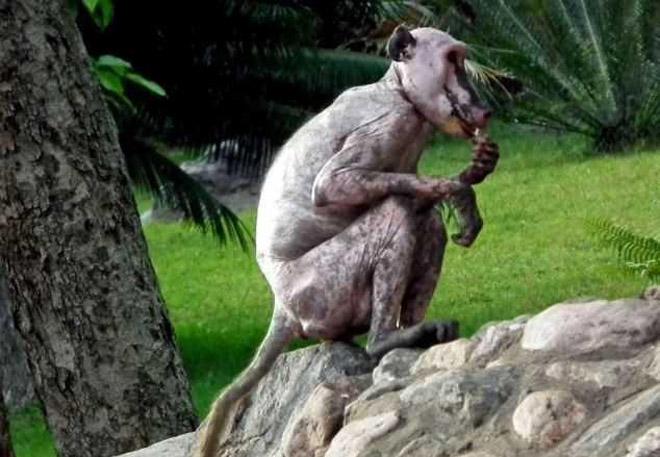 Ганцаардмал сармагчин
