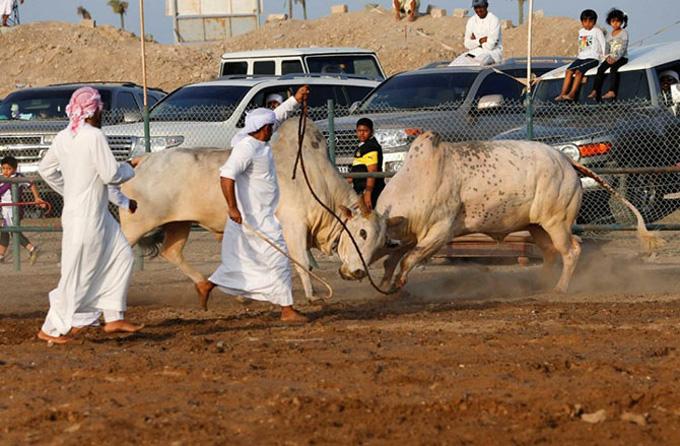 Баян арабчуудын зугаа