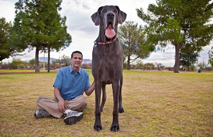 Дэлхийн хамгийн том нохой үхжээ