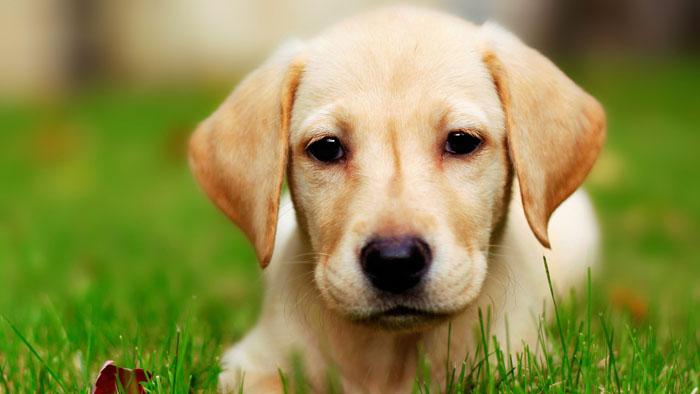 Нохойны тухай сонирхолтой 12 баримт