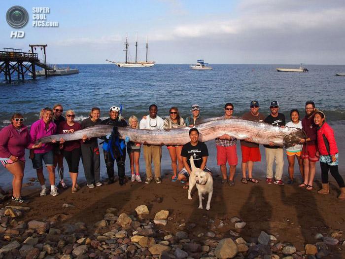 5 метрийн урттай ийм сонин загас олджээ