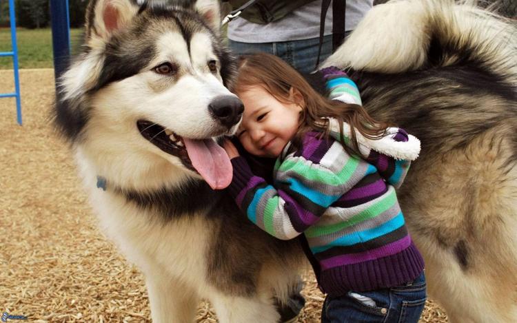 Нохой яагаад хүний үнэнч анд вэ?