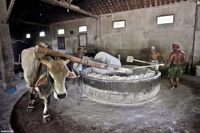 Индонезид хэрхэн гоймон хийдэг вэ?
