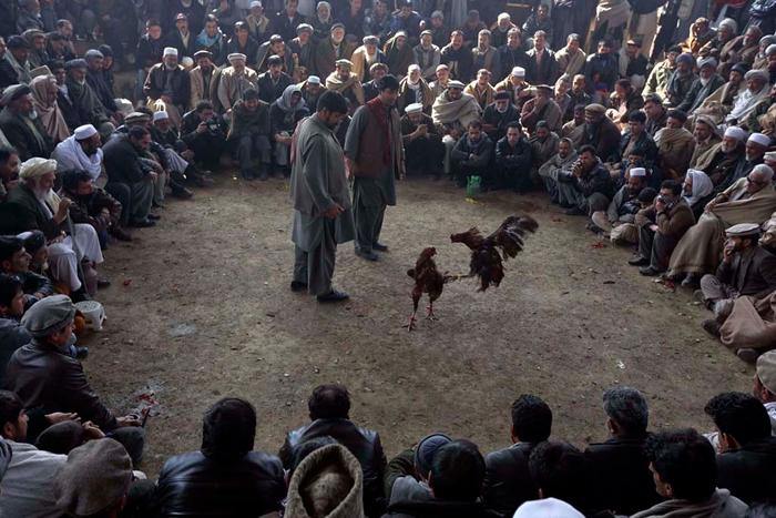 Афганистанд  болдог азарган тахианы тулаан