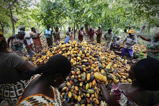 Африкт хэрхэн какао хийдэг вэ?