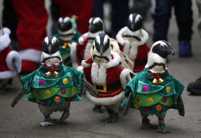 Оцон шувуунууд зул сарын баярын мэнд хүргэж байна