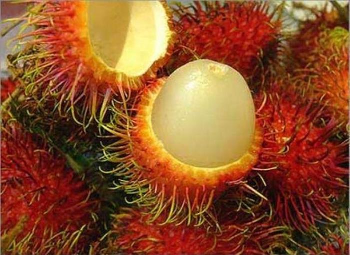 Зүүн азийн хачирхалтай жимс