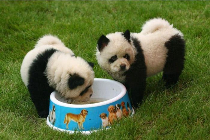 """Хятадад """"панда нохой"""" хамгийн их эрэлттэй байна"""