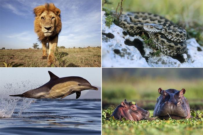 Хүний буруутай үйлдлээс болж устаж буй амьтад