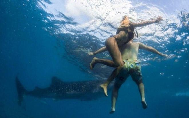 Себу арал дахь халиман аварга загас