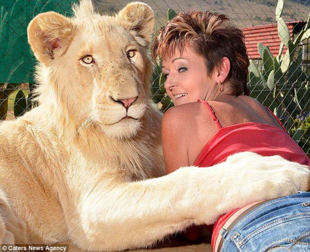 """Гэрийн тэжээмэл цагаан арслан """"Тимба"""""""