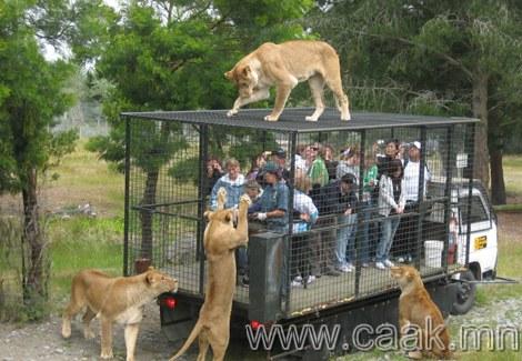 Зэрлэг амьтдын хүрээлэн