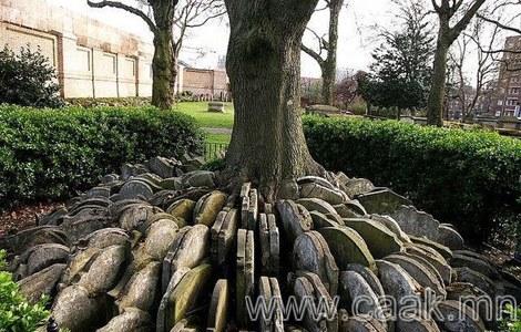 Булшны чулуун үндэстэй мод