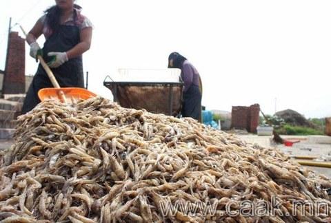 Хятадын хулхи сам хорхой