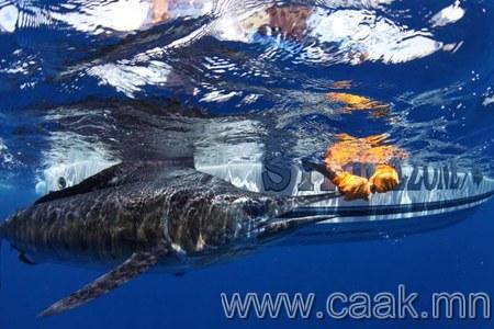 Эрдэмтдийн төлөвлөгөөг нураасан акул