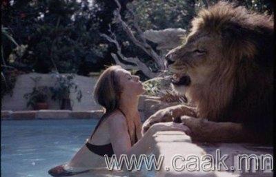 Гэрийн тэжээмэл арслан