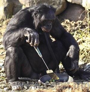 Дарвины онолыг үнэмшүүлэх сармагчин
